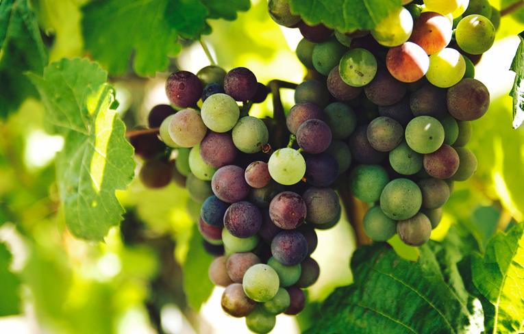 Deň otvorených pivníc® 2017 - zoznam vinárov