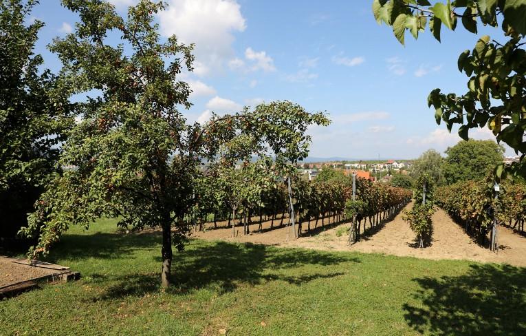 Vinári, ktorí Vás privítajú vo svojich viniciach počas Dňa vo vinohradoch® 2020