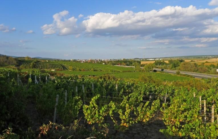 Svet objavuje slovenské vína