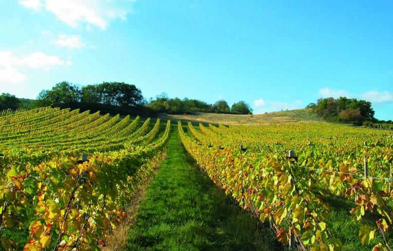 Deň vo vinohradoch® 2021 - zoznam vinárov